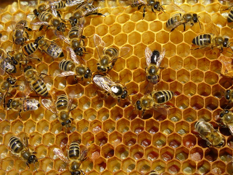 The work of bees - magical and wonderful!