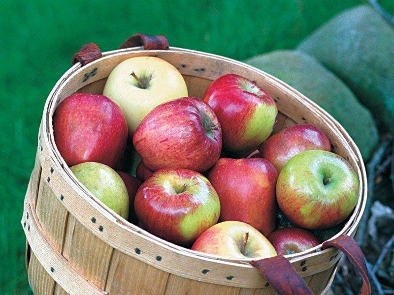 no-spray-organic-apples-1