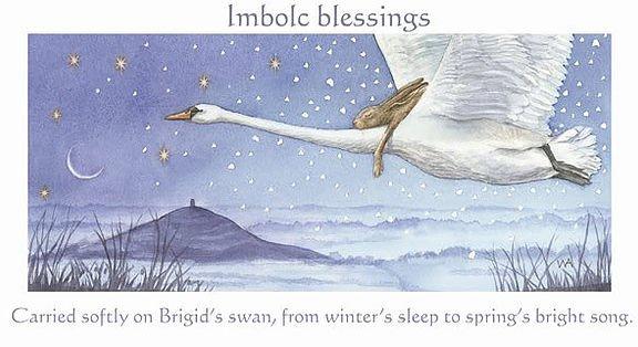 brigid-swan